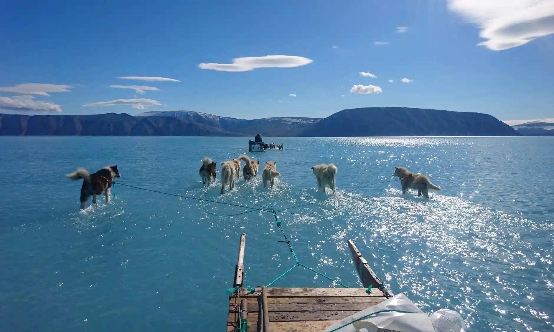 dogs dragging sled across melted fjord