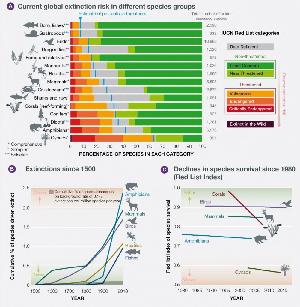 UN Biodiversity Report classification of species and risk thereto