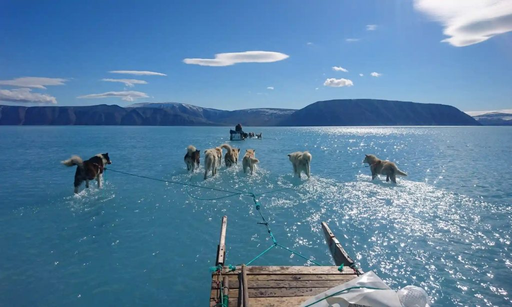 dogs dragging sleds over melted fjord